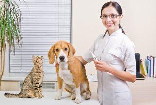 assurance animale